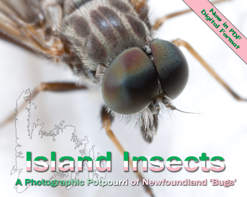 Island Insects: a photographic potpourri of Newfoundland bugs - Digital Edition
